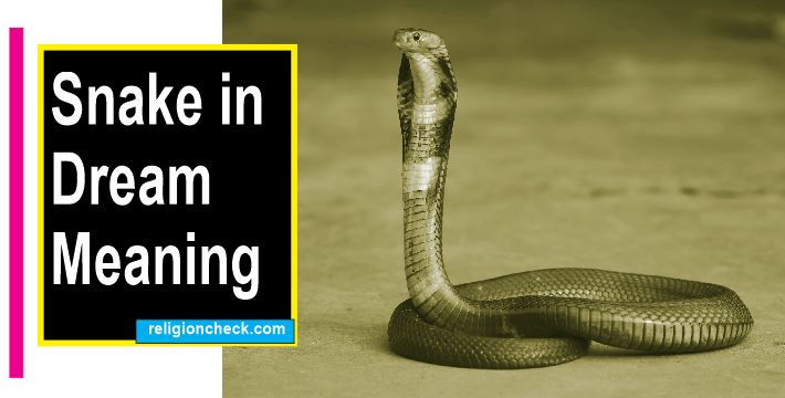 A Snake in My Dream Meaning and Reasons