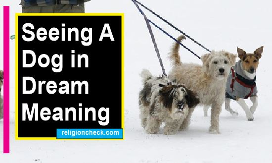 Meaning of Seeing A Dog in your Dream