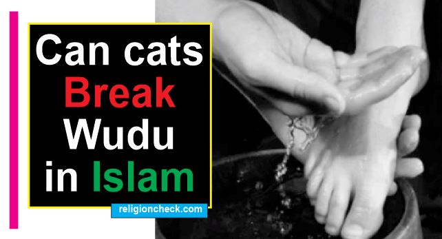 Cats cannot break Wudu in Islam
