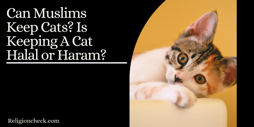 Can Muslims Keep Cats? Is Keeping A Cat Halal or Haram?