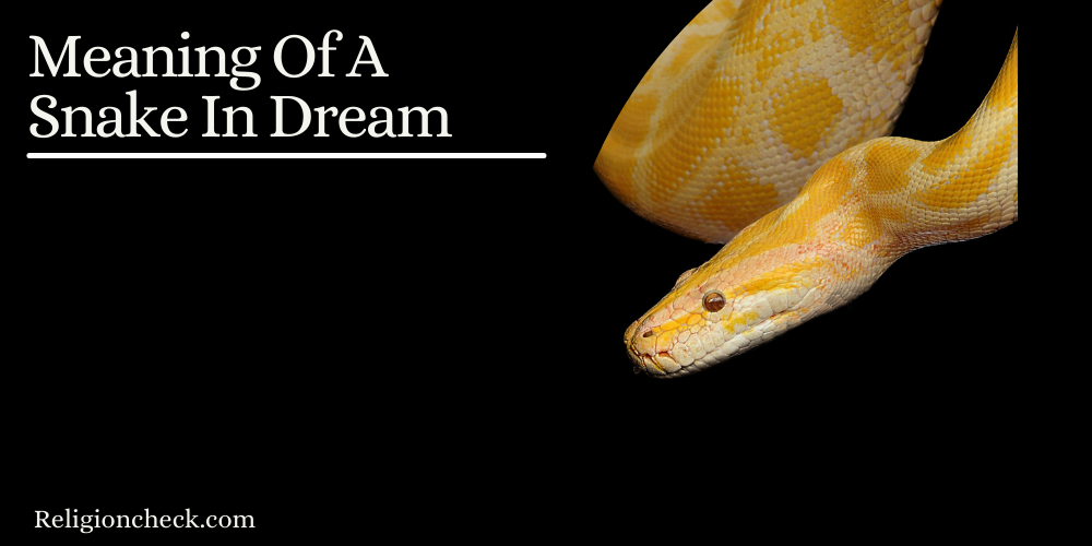 Meaning Of A Snake In Dream