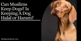 Can Muslims Keep Dogs? Is Keeping A Dog Halal or Haram?